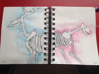 Deer and Tiger skeletons