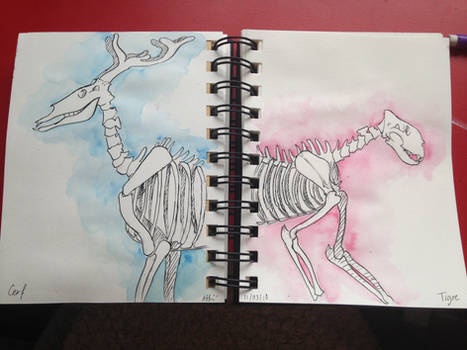 Deer and Tiger skeletons