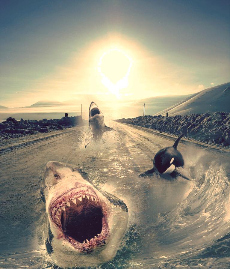 http://fc09.deviantart.com/fs30/f/2008/122/d/d/Street_sharks_by_riofriz.png
