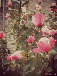 My pink paradise