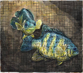 Media: Color fish