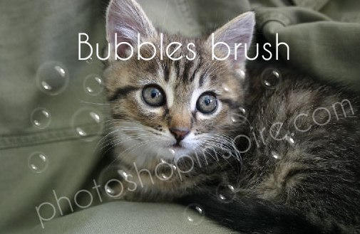 Bubbles Photoshop brush Freebie
