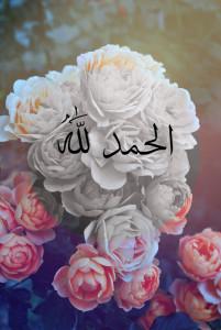 afaq2002afaq's Profile Picture