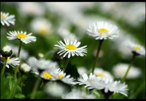 spring flowers by John77