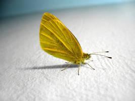 Butterfly by John77