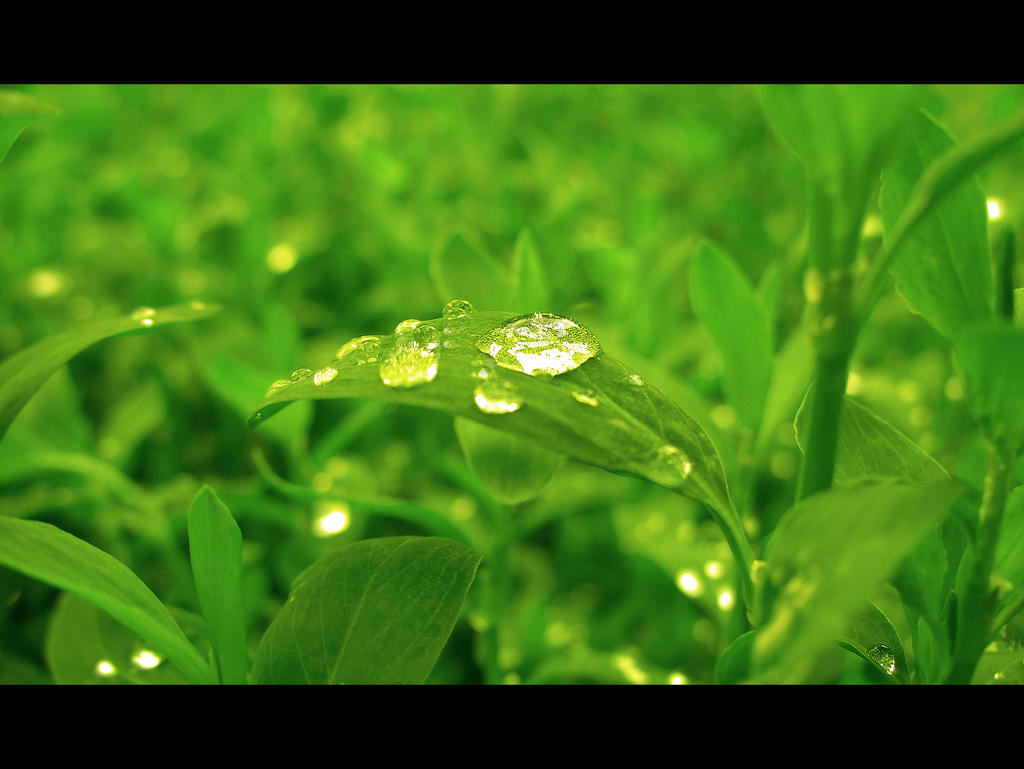 Green by John77