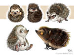 Hedgehogs Study