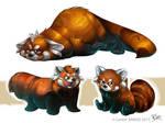 Red Panda study