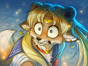 What does the SailorFox say ?
