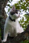 Kitty by linneaphoto