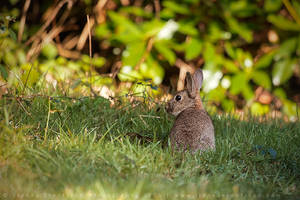 Spring Rabbit by linneaphoto