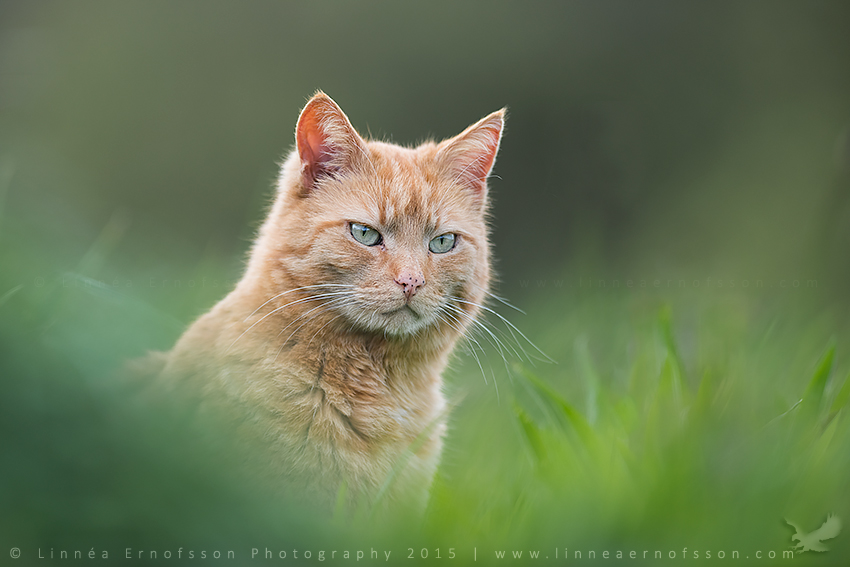 Cuddly Cat by linneaphoto