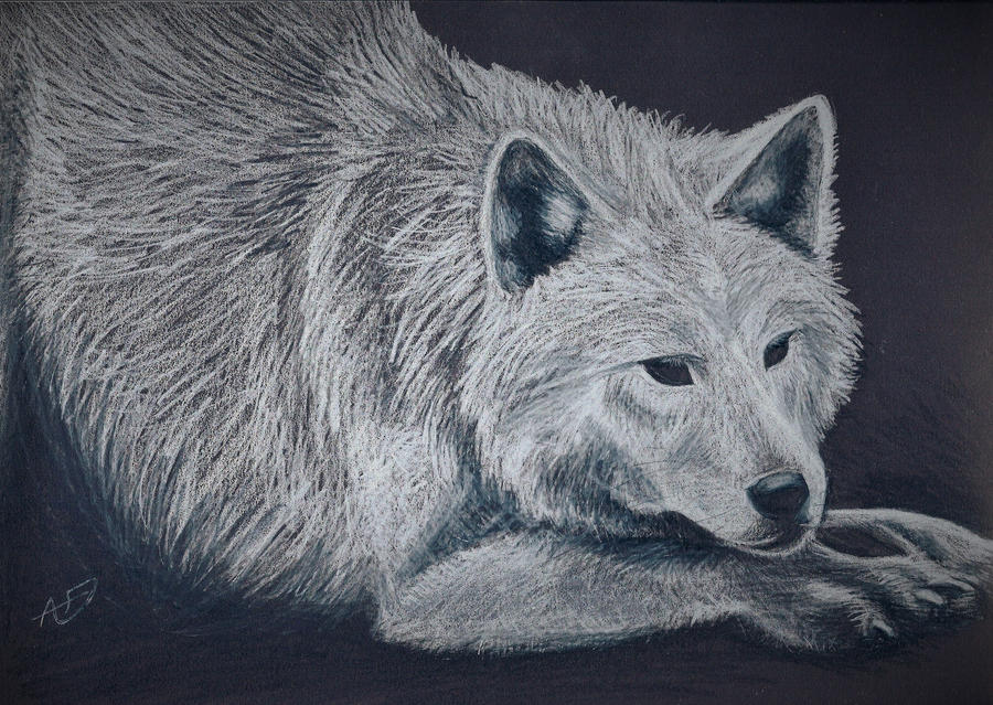 White Wolf by 13lexwolf
