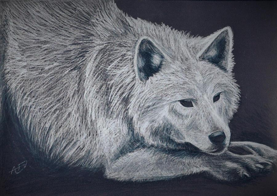 White Wolf by 13lexwolf