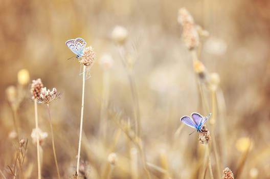 Azure Bleu