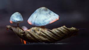 Mushroom by Aurelien-Minozzi