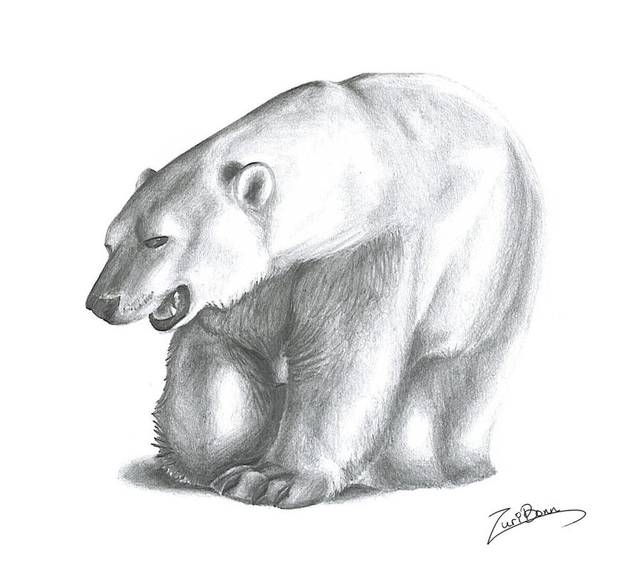 Polar Bear by wolfeiz on DeviantArt