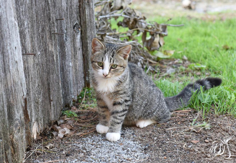 Barn Cat by HawserMedia