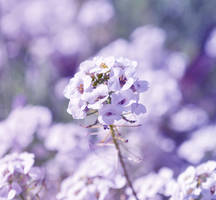 Violette by Characol