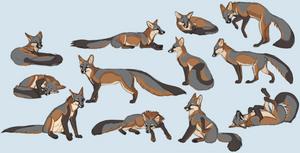 gray fox sketch sheet
