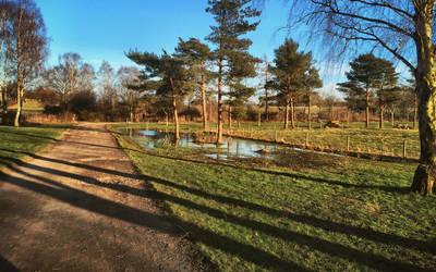 Reflecting Pond by Matjulski