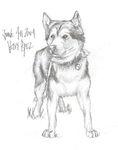 Husky Dog Drawing Husky Dog by Vickygeez