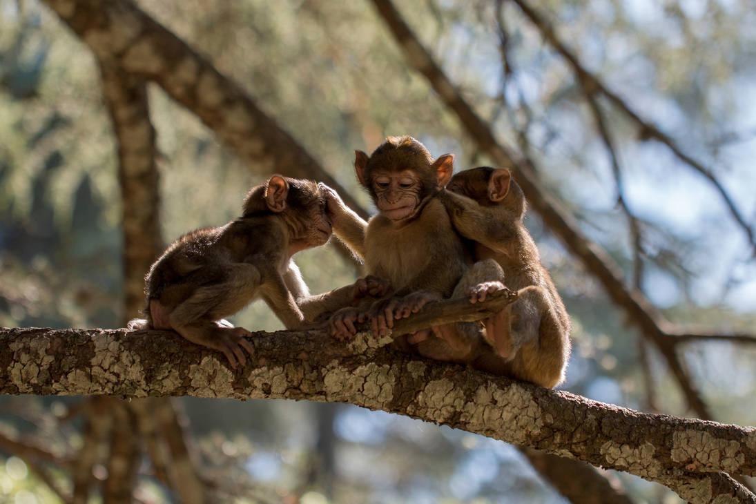 2bb47b248 Three wise monkeys by IstvanIV on DeviantArt