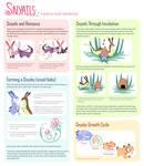 Snyail Reproduction (open species!)