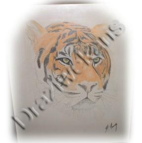 Tiger by draziwekans