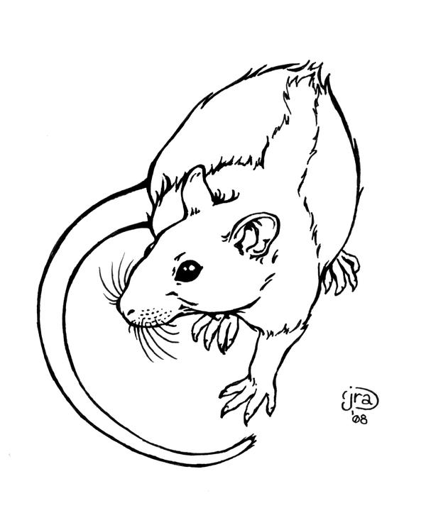 Rattie Lineart by Aycelcus