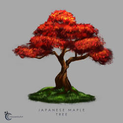 Types of Trees Part 1 - Japanese Maple Tree