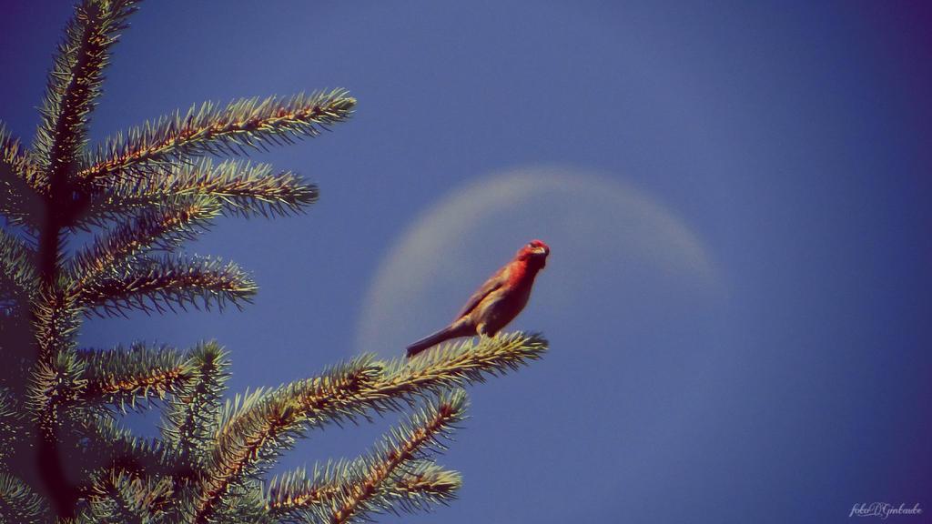 Moon and bird by gintautegitte69