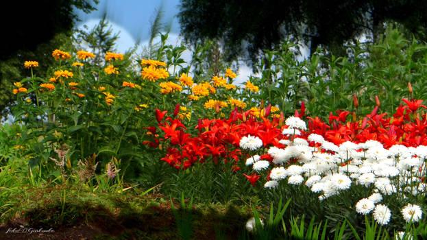 Seduvos garden