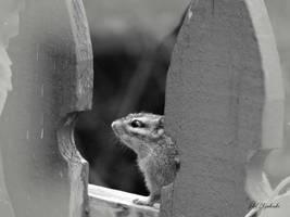 Chipmunk....w.b. by gintautegitte69