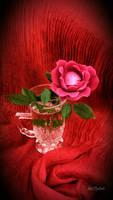Last backyard rose