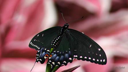 Butterfly..................