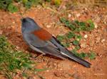 Grand Canyons ..........bird...5