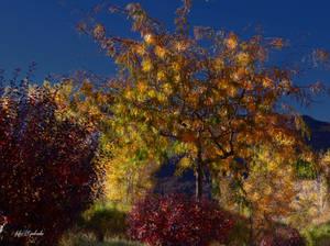 Autumn....Utah.... by gintautegitte69