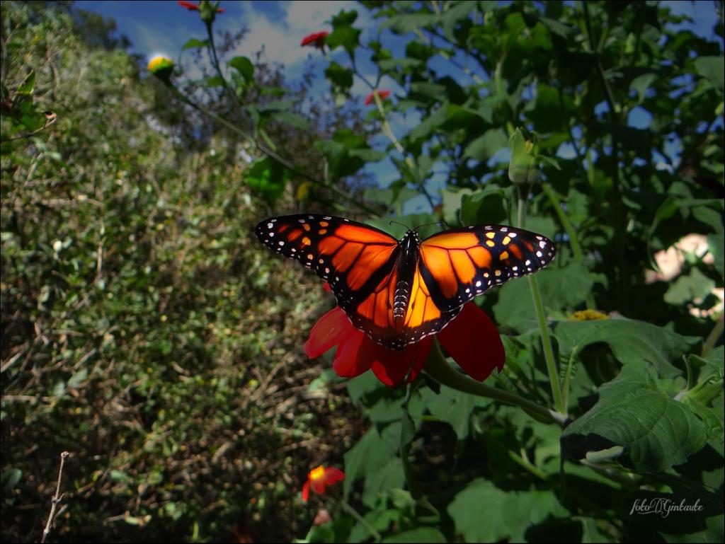 Butterfly......