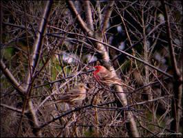 Spring.......birds.... by gintautegitte69