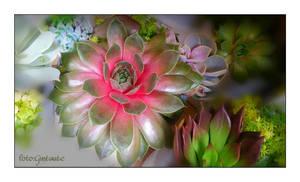 Flowers 52 by gintautegitte69