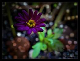 Summer.... by gintautegitte69