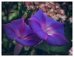 Morning flowers.... by gintautegitte69