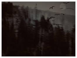 Evening...forest... by gintautegitte69