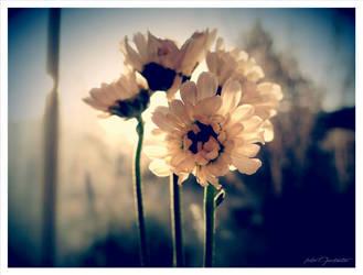 Flowers morning...