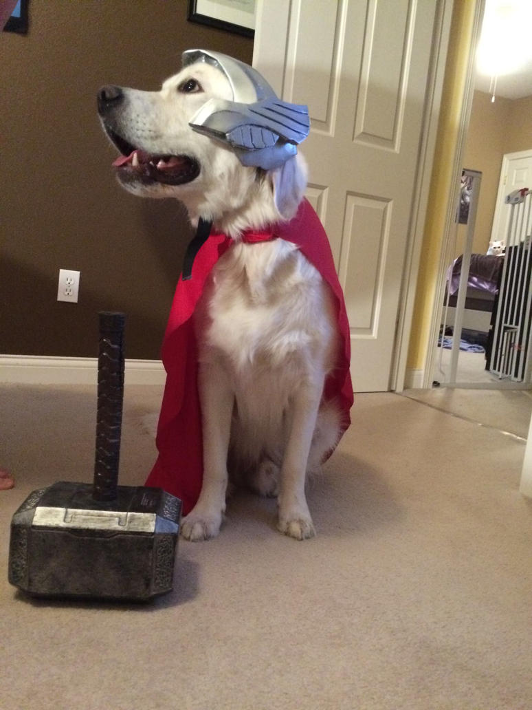 Thor Dog of Thunder grown up by Saharadesr