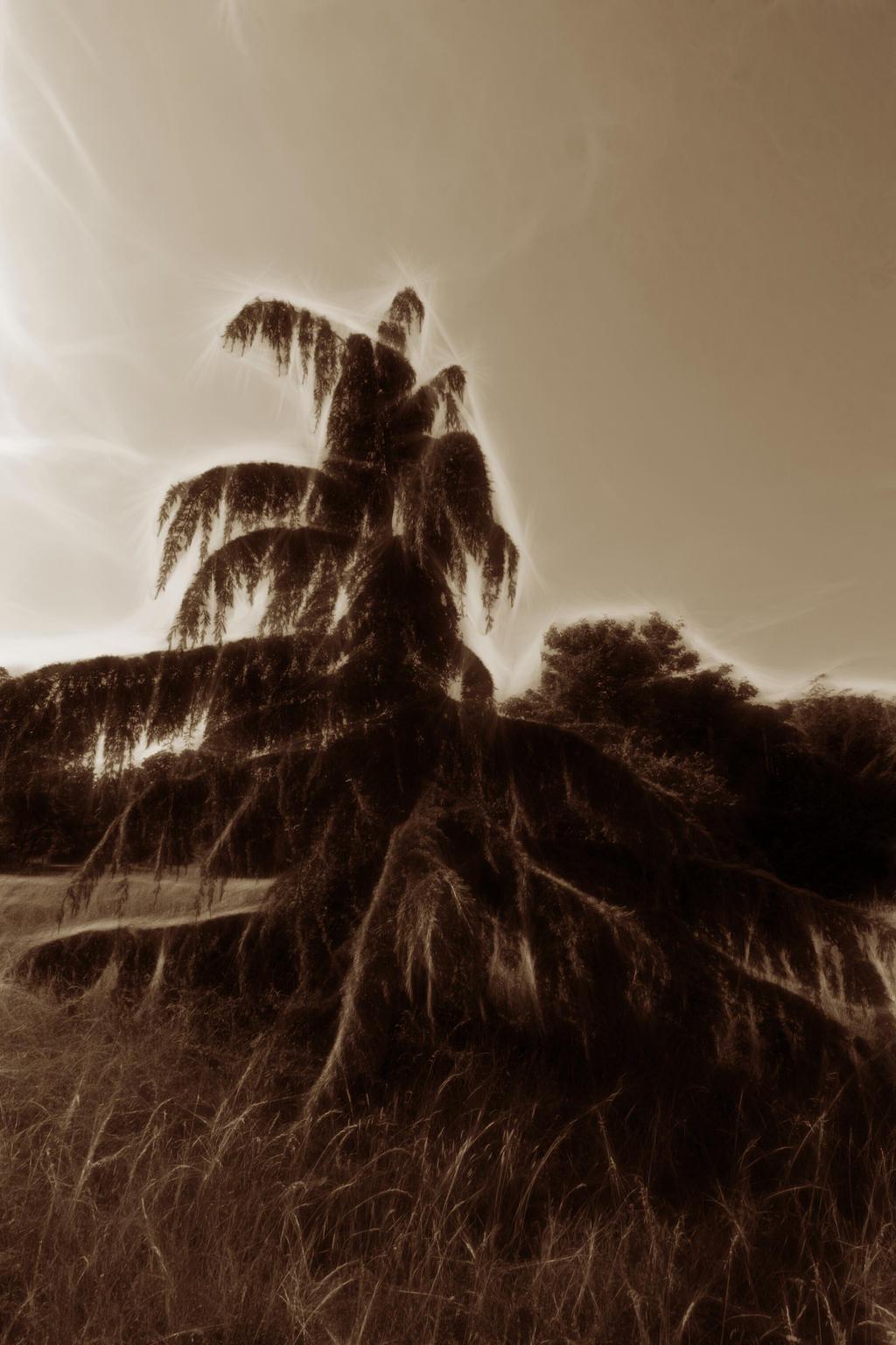 Un arbre du jardin d 39 agronomie by limande on deviantart for Art du jardin zbinden sa