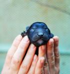 black baby II