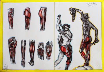 LEGS ANATOMY ART- draw by RaVe TuBe