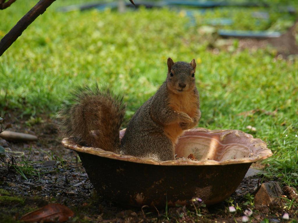 Munching Squirrel 05 by botanystock